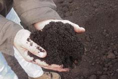 Органические отходы - компост